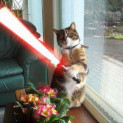 Star Wars Kitties!