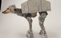 Dogs, Star Wars, Emperial March – Enough Said